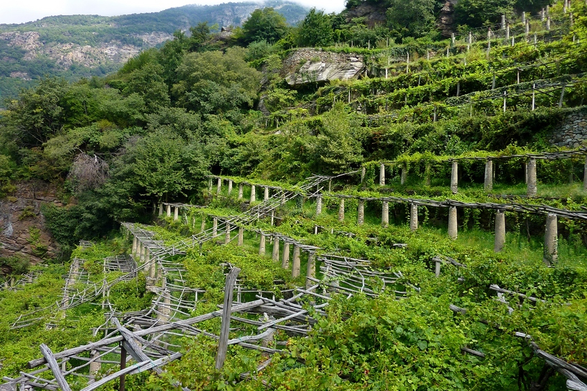An amphitheater of vineyards in Carema, Piemonte (Italy)