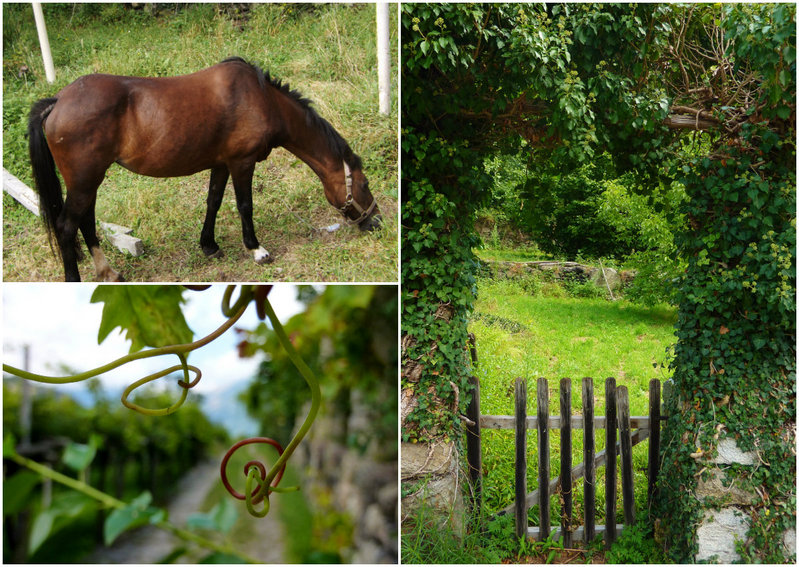 Images from The Vineyards Trail in Carema, Piemonte