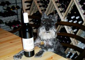 Otis the Wine Dog was welcome everywhere we went in Europe.
