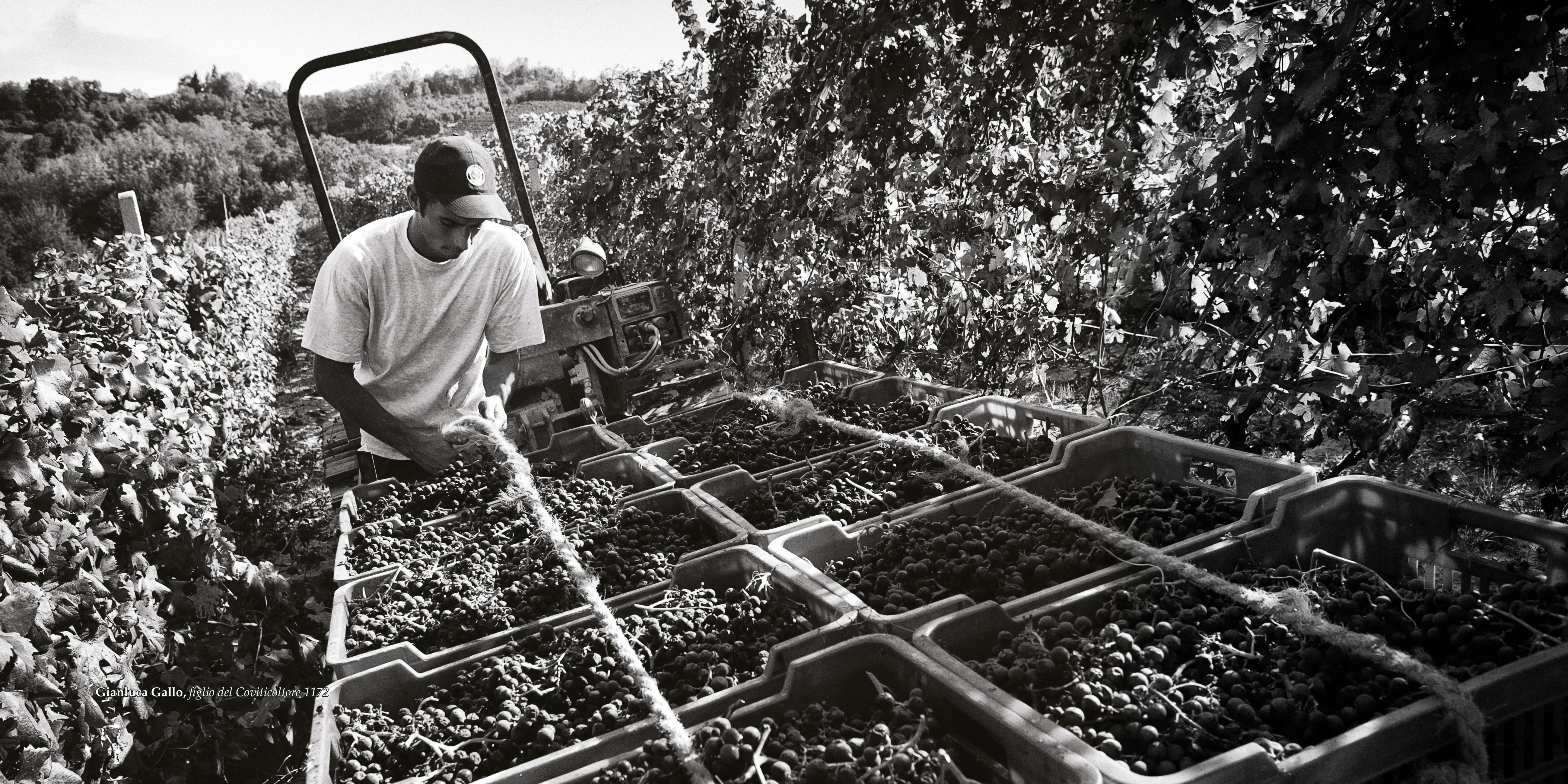 Working in Clavesana's vineyards. Photo compliments of Clavesana