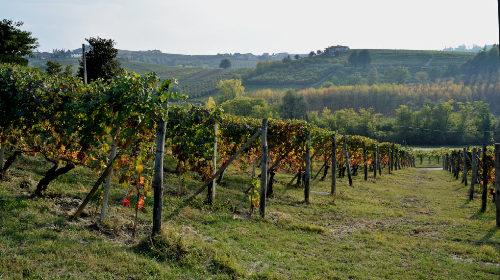 Vineyards of Marchesi di Gresy in Barbaresco. Photo © Julie Sitch