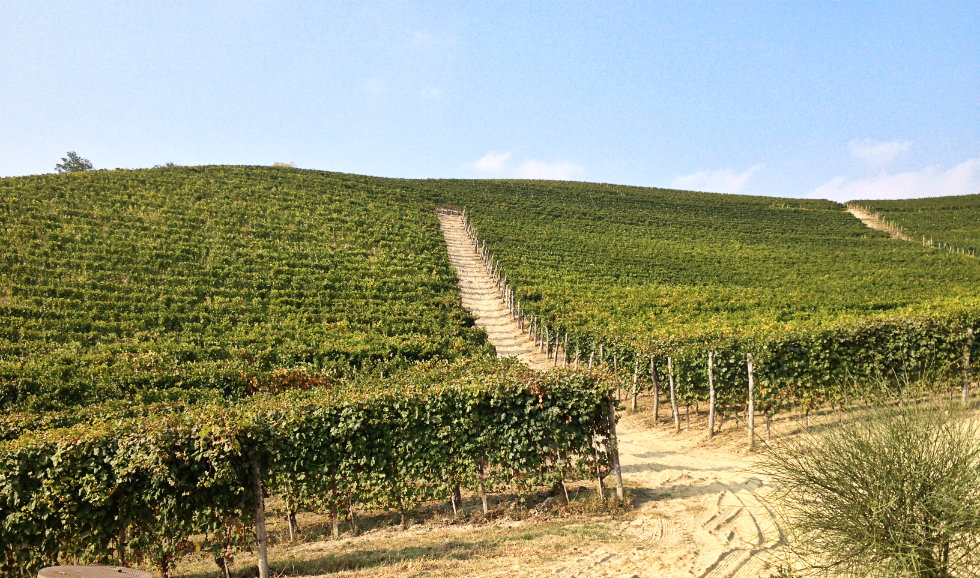 Vineyards of Marchesi di Gresy in Barbaresco