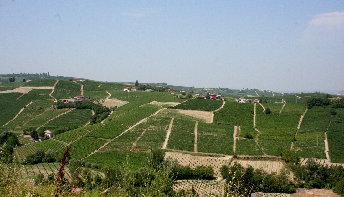 Sorì - Moscato vineyards