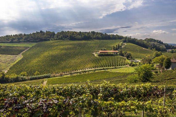 Vineyards in Piemonte, Aurelio Candido CC