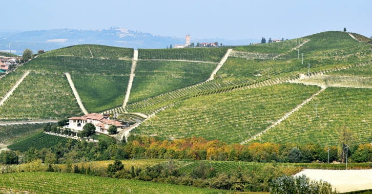 Marchesi di Gresy winery in Barbaresco. Photo © Julie Sitch