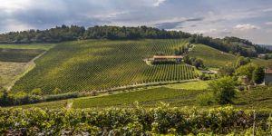 Guida indispensabile al Piemonte del vino