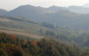Wineries of Monferrato