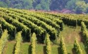 Wineries of the Langa