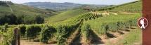 Circling the vineyards of Barbaresco