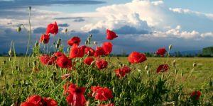 Vini, eventi e paesaggi: ecco la primavera in Piemonte!
