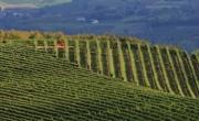 Wineries of Roero