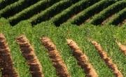 Wineries of Gavi and Tortonese