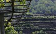 Wineries of Torinese