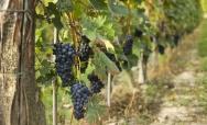 Festa del Vino Monferrato - 19-28 Settembre, Casale Monferrato (AL)