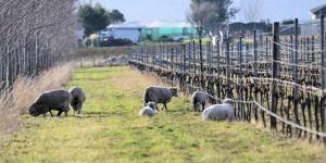 Quanto è verde il tuo «vino verde»? Guida ai vini naturali&Co.