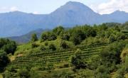 Wineries of Alto Piemonte