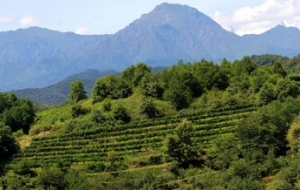 Wineries of Alto Piemonte