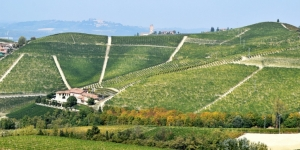 Touring the Langhe and Barbaresco in the fall